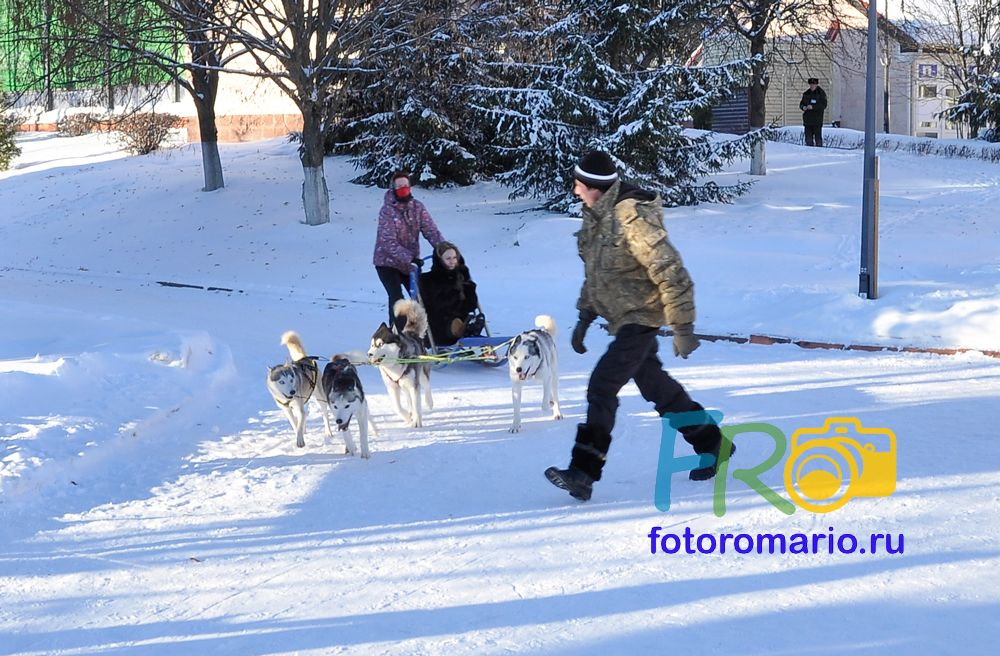 Фотографии сибирских Хаски