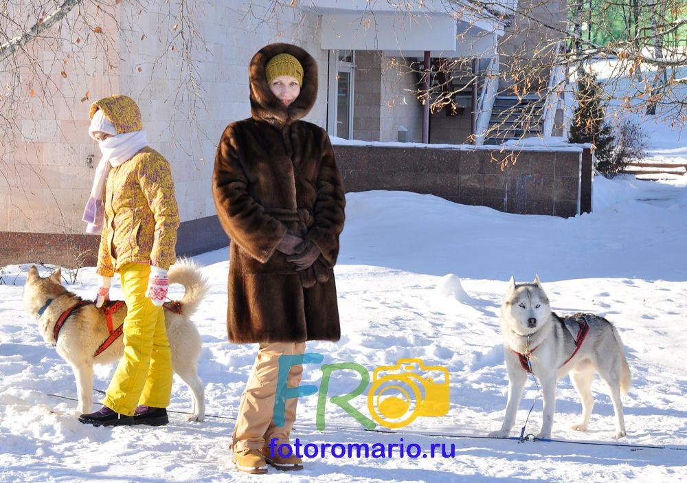 Фотоотчёт сибирские Хаски